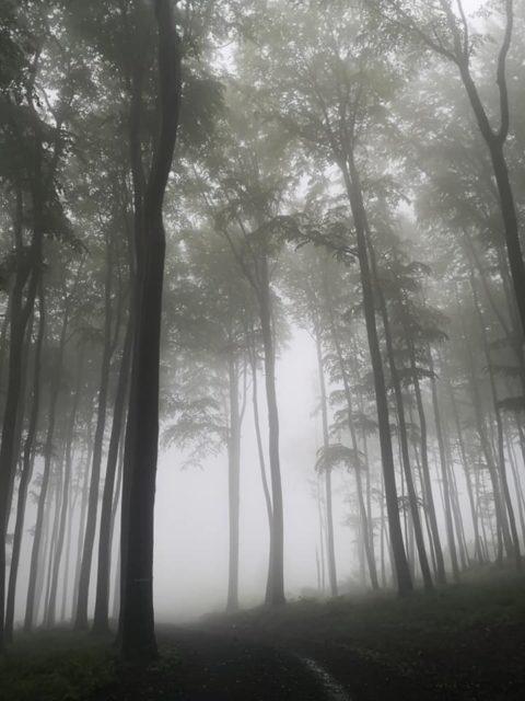 male karpaty les