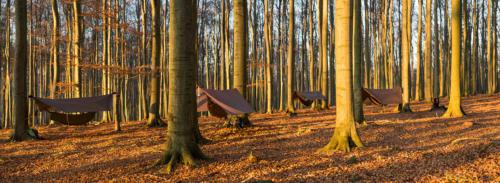 lesík za Jelencom